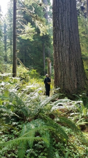 9 Quinault rain forest walk 2web