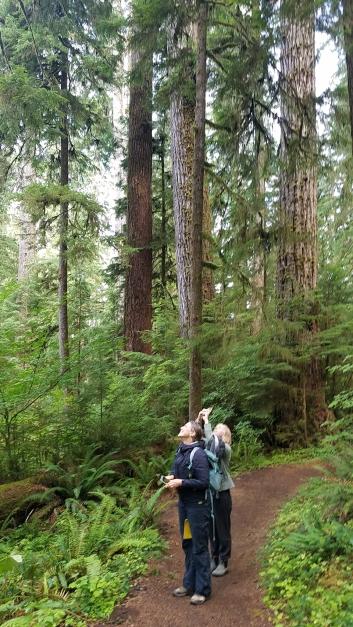 9 Quinault rain forest walk