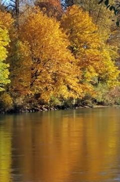 ACMA fall colors